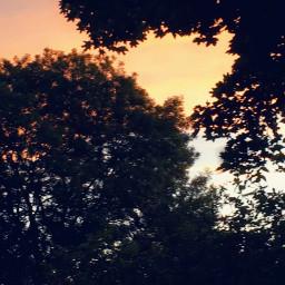 sunset photography lucyfoxm trees nature beautiful gorgeous