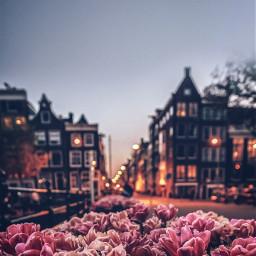 freetoedit rose cityroad place memory building sky