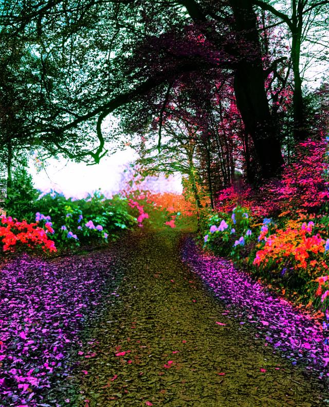#colorpop #colorful #landscape #huechange