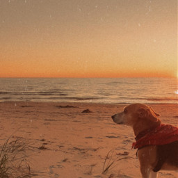 cottage beach water lake sunset walk dogwalk beachwalk sunsetwalk sunsetbeach aesthetic cute cutedog waves wave freetoedit pcwateraroundme wateraroundme