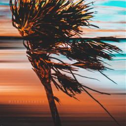 summer sky palm dream freetoedit