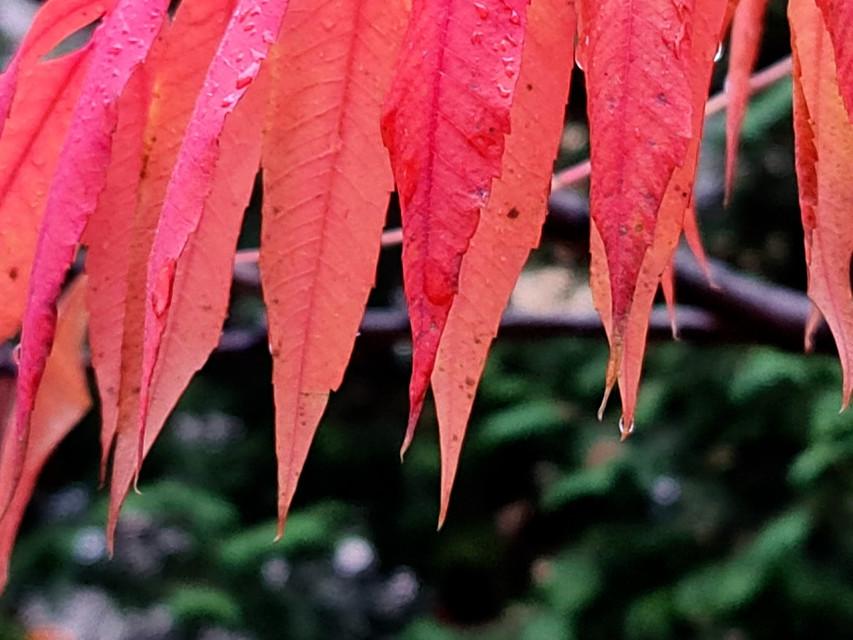 From the beauties of autumn 🧡🍂 #autumn #autumncolors #fallcolors #autumnleaves #nature #macro #naturephotography #macrophotography #fallmood  #freetoedit