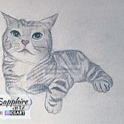 cat drawing fat fatcat catdrawing greycat sketch catsketch traditionalart traditionaldrawing art drawingart drawingsketch realismpractice sketchbook realism cute cutecat