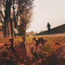 italy shotoniphone myphoto myshot autumn