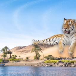 tiger desert giant deserts tigre ecimagineabrighterreality freetoedit