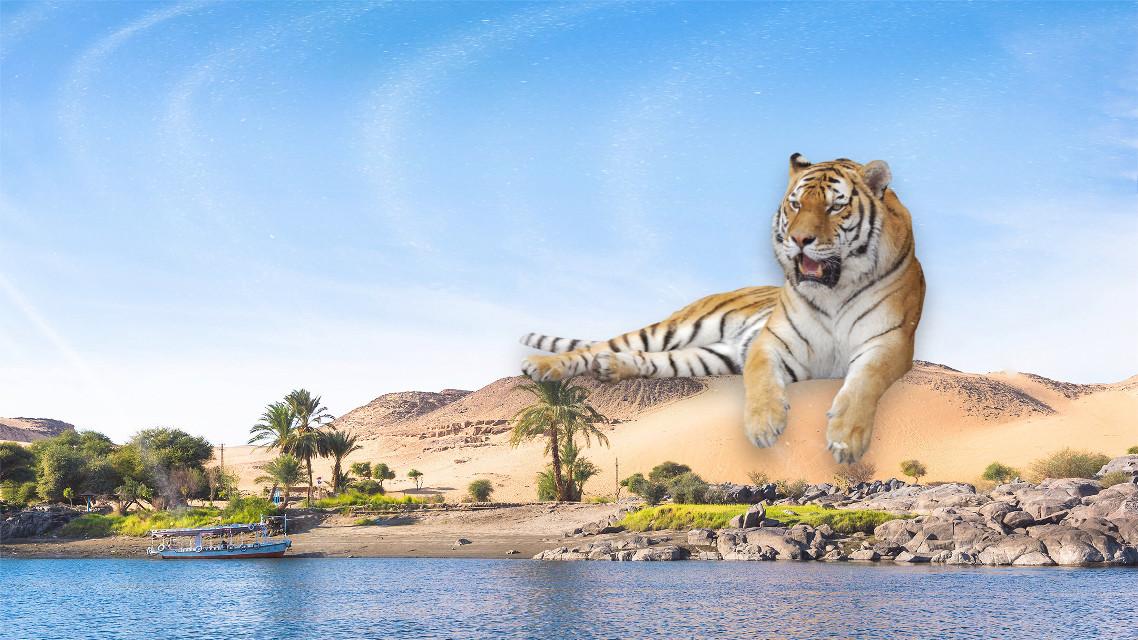 #tiger #desert #giant #tiger🐯 #deserts #tigre #deserto #gigante #giantanimals #animalgiant #animalgigante #animaligiganti  #freetoedit #ecimagineabrighterreality #imagineabrighterreality