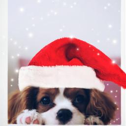freetoedit xmas remix mrlb2000 dog sweet christmas december lol madewithpicsart