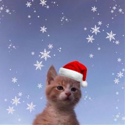cat kitty kitten neko feline love winter christmas happyholiday happyholidays christmasspirit christmascheer joy cute freetoedit sky beautiful christmascat catsofpicsart