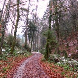 freetoedit forest woods wood trees tree snow badweather leaves leaf autumn rain raining street nature naturephotography canon