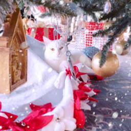 freetoedit cat kitty cats christmas christmascat