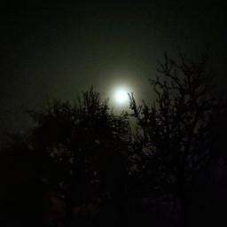 moon night trees freetoedit pcmyfavoriteday myfavoriteday