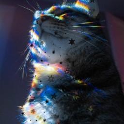 cat stars catslover catsphotography catlover stelle gatto gatti light rainbow lightrainbow freetoedit srcstarsbackground starsbackground