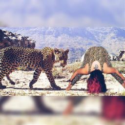 yoga yogi leopard leopardart yogaart nature natureyogi cats leopardprint animals animallover peace love follow animalart animalprint forwardfold forwardfoldpose