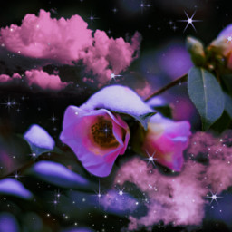 flowers flower roses rose clouds stars purple aesthetic vibes psychedelic beautiful colors heypicsart makeawesome freetoedit unsplash
