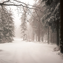 winter frozen coldday winterwonderland trees fog foggyday snow forest forestroad beautifulnature myphoto poland freetoedit