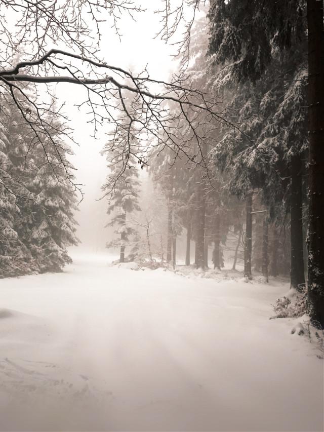 Happy Sunday... 😊 🌨️🎄 #winter #frozen #coldday #winterwonderland #trees #fog #foggyday #snow #forest #forestroad #beautifulnature #myphoto #Poland