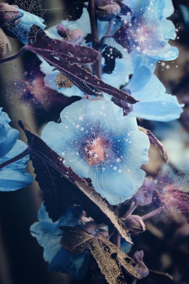 #flower #blue