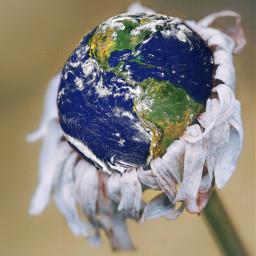 climatechange earth flower dead savetheplanet freetoedit