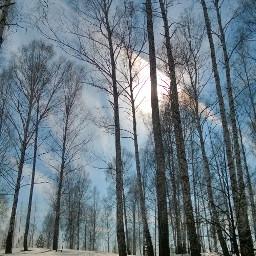 landscape forest naturephotography