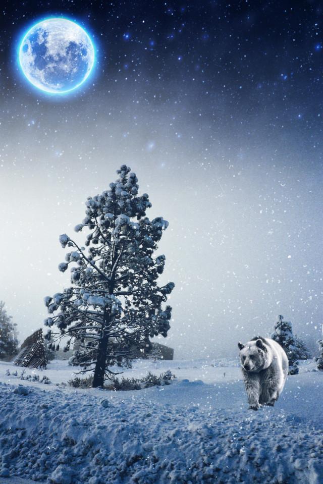#bear #snow