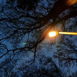 kinora streetlight lookingup trees freetoedit