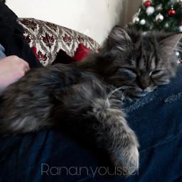 catsofpicsart cat tree cristmas