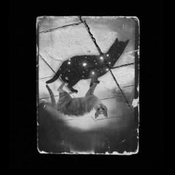 stars shadow cat bw