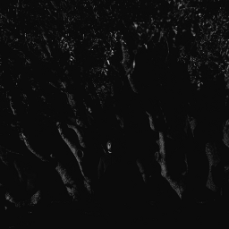 night nature abstract minimalism black trees portrait art artphotography freetoedit