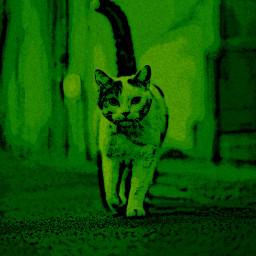 green cat freetoedit