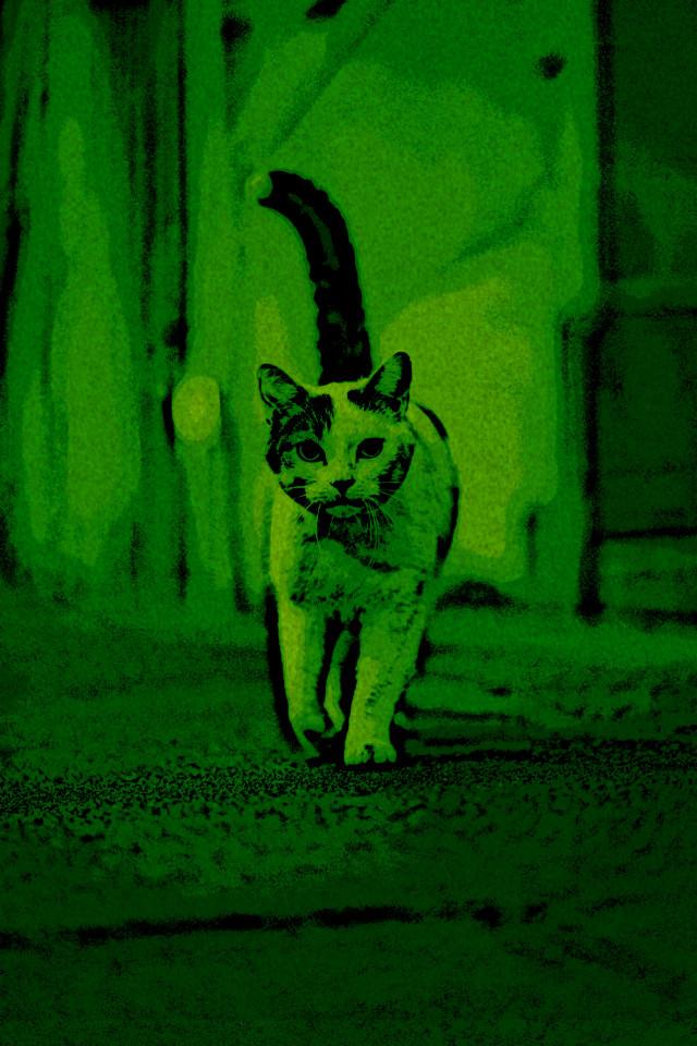 #green #cat