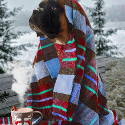 mood moodoftheday winter2020 freetoedit