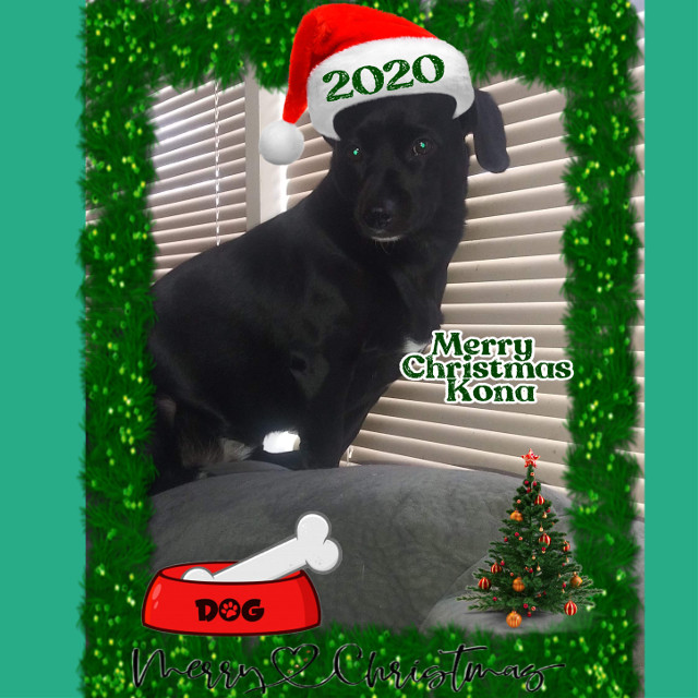 #MerryChristmas2020 #Kona's 2nd Christmas #DogsOfChristmas #furbabymama