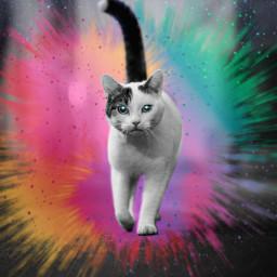 cat color colorsplasheffect stars sky picsart picsartpets pet kitty picsartcat picsartphoto replay freetoedit