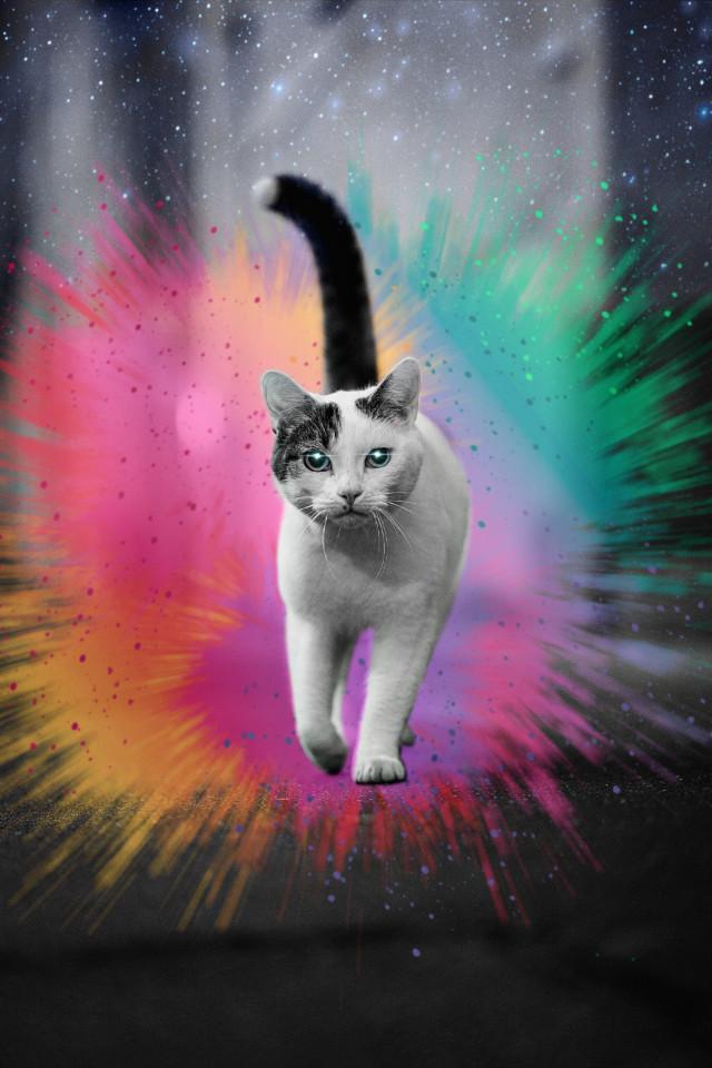 #cat #color #colorsplasheffect #stars #sky @picsart #picsart #picsartpets #pet #kitty #picsartcat #picsartphoto #replay #freetoedit