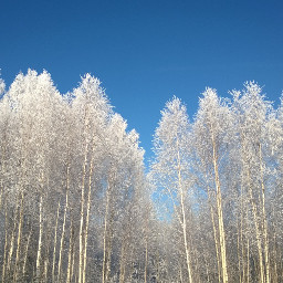 tree snow naturephotography