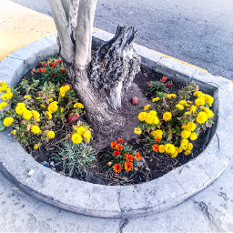 plantas photography flores beautiful plants nature naturleza mundoverde verde green street freetoedit