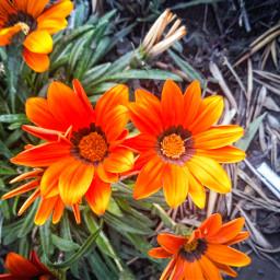 freetoedit flores plantas photography pic