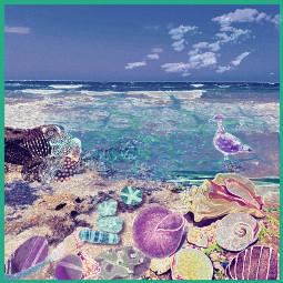 freetoedit beachday seashore shorebirds seashells lowtidehighnoon oceanside nature remixedbyme