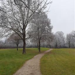 freetoedit remixit remixme landscape nature winter trees