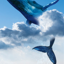 unsplash ファンタジー クジラ fantasy whale surreal picsart madewithpicsart picsartedit freetoedit