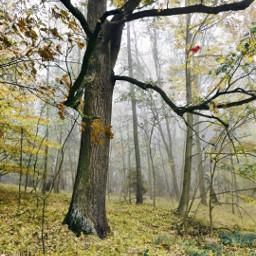 outdoors nature naturelover edir myedit woods forest adventure trees freetoedit