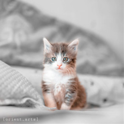 cute cat kitten pet mypet colorsplash colorsplasheffect blackandwhite orient_arts madewithpicsart heypicsart makeawesome picsart freetoedit