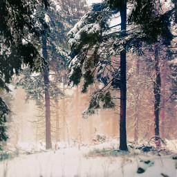 winter snow frozen coldday winterwonderland trees fog foggyday beautifulnature myphoto christmastime freetoedit