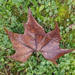 leaf nature lookdown grass unedited freetoedit