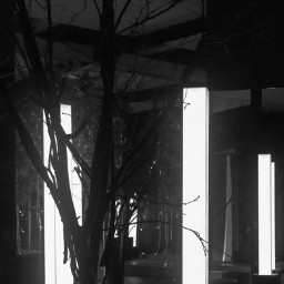 drytrees trees light lamp silhouette exhibition conceptual photo photography canon canon700d photoshop photoshopcs5 freetoedit