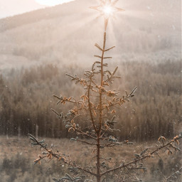 holiday yuletide christmas tree forest nature outside star light photography surreal edit myedit