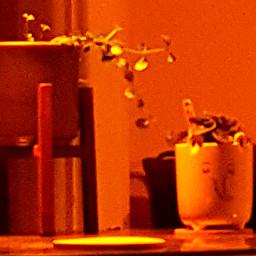 photography plantsandflowers plantlife houseplantlove houseplants houseplant_keeper