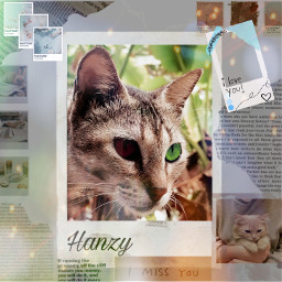 freetoedit cat catlover loveeveryone lovenature