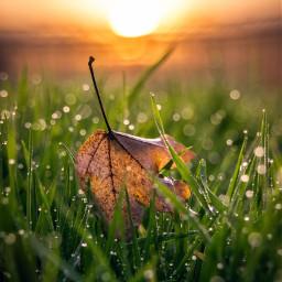 autumn leaf picsart bokeh sunset freetoedit