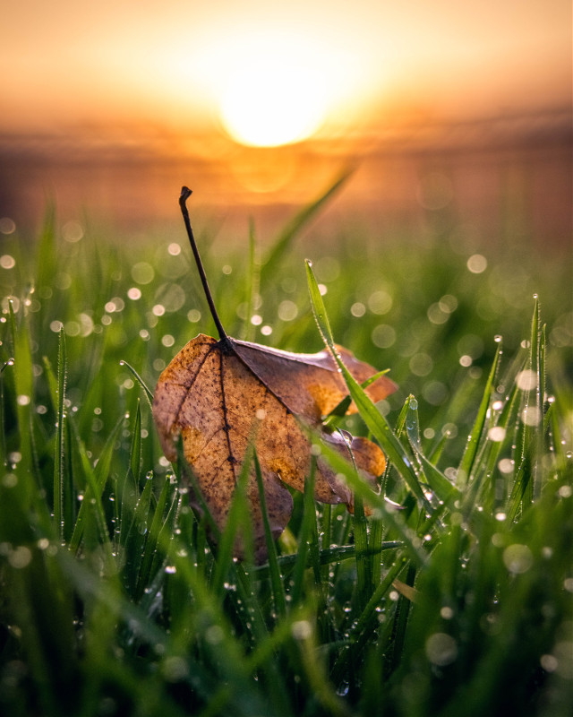 The last leaf has fallen 🧡🍁 #autumn #leaf #picsart #bokeh #sunset #freetoedit